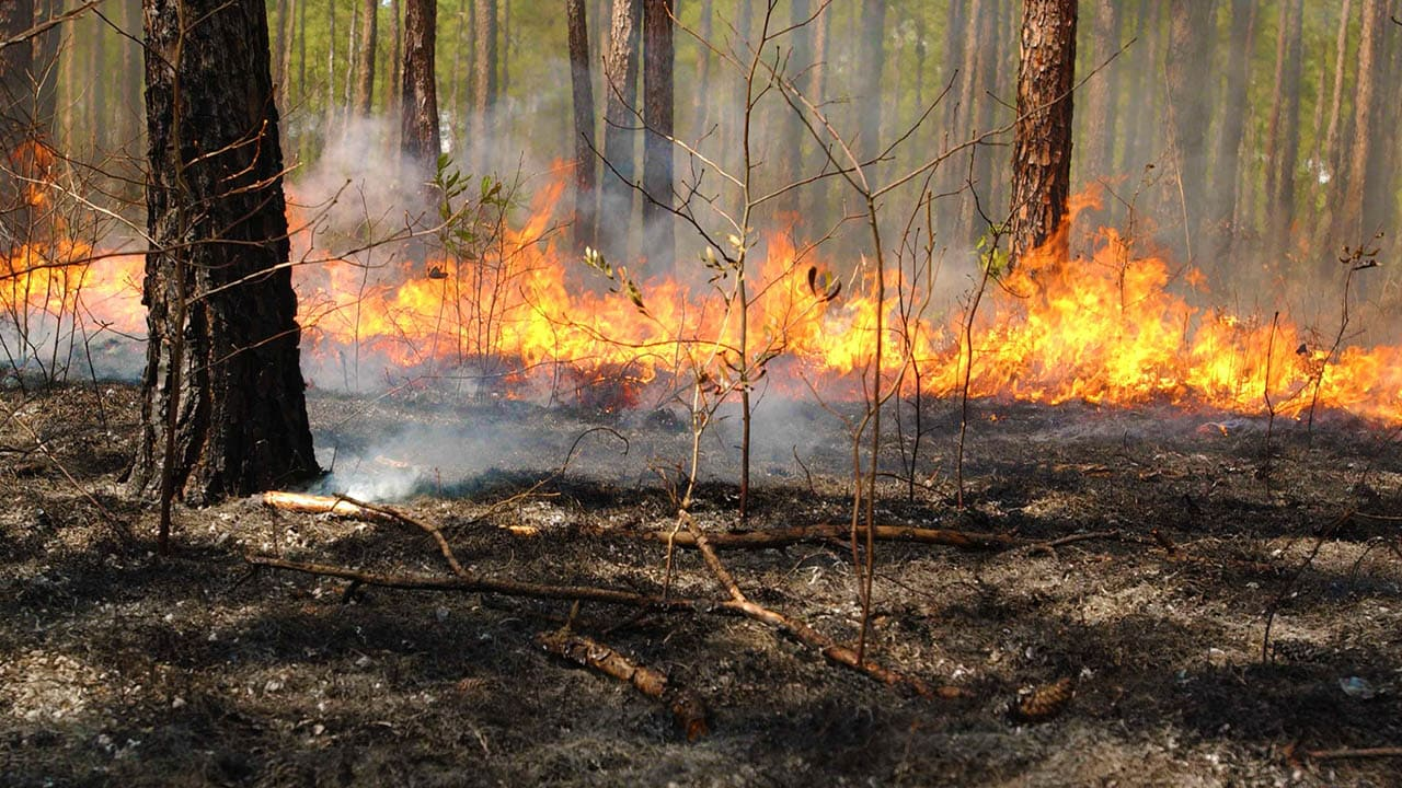 Prescribed Burns At Crowders Mountain State Park